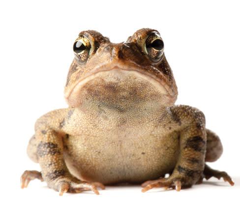 Photoark toad wmigwr