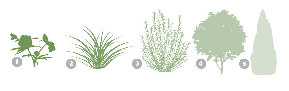 Planting privacy portland monthly for Quick growing ornamental grasses
