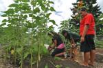 Thumbnail for - International Harvesters