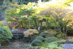 Thumbnail for - Slide Show: The Portland Japanese Garden's Fall Colors