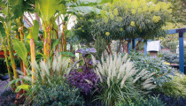 Thumbnail for - A Dazzling Portland Garden with Tropical Flair
