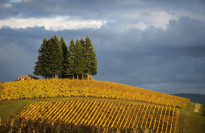 Thumbnail for - Celebrate Thanksgiving with 165 Willamette Valley Wineries