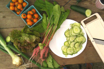 Thumbnail for - A Guide to Seattle's 2015 Farm Shares