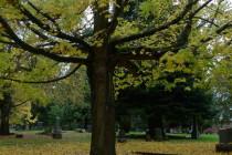 Thumbnail for - Portland's Top Five Fall Foliage Walks