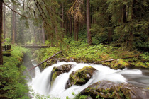 Thumbnail for - Insider's Guide to Olympic National Park