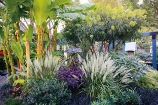Thumbnail for - A Dazzling Portland Garden with Tropical Flair