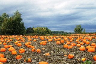 Thumbnail for - The Ultimate Guide to Northwest Pumpkin Patches