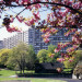 Thumbnail for - Elder Friendly® Certification for Terwilliger Plaza