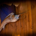 Thumbnail for - Linda Derschang's Bait Shop Opens