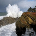 Thumbnail for - Oregon Coast Guide: X Marks the Spot for Naturalists