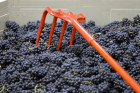 Thumbnail for - Slide Show: SE Wine Collective's First Crush