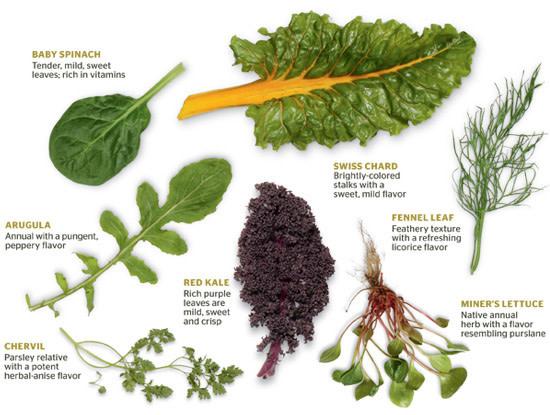 leafy asperations slideshow 1