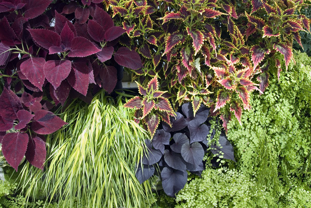 Put Foliage First. Create A Framework Of Luscious Leaves To Set Off Your  Favorite Flowers. For Example, Set Off A Swathe Of Black Eyed Susan With A  Backdrop ...