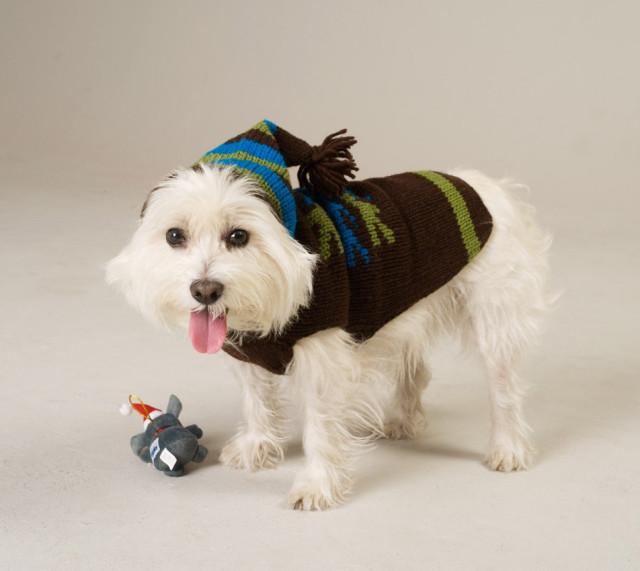 pets-dog coat