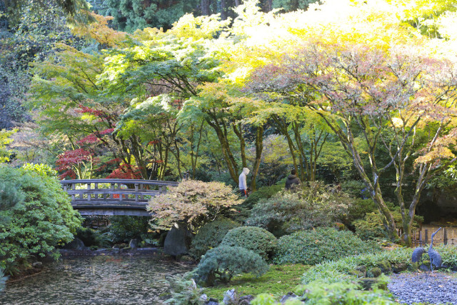 See the Portland Japanese Garden Dressed Up for Fall | Portland Monthly