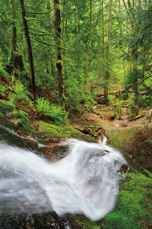 Seattle Trails Cougar Mountain Regional Wildland Park