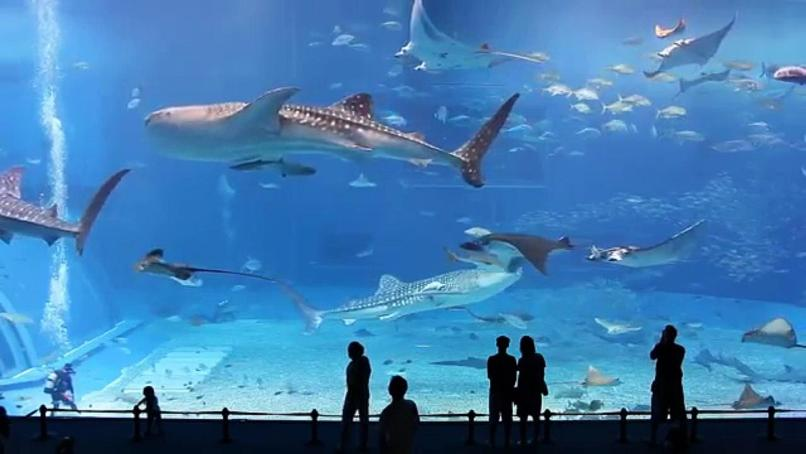 Most Largest, Biggest & Best Aquariums In the World
