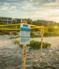 How To Protect Beach Nesting Wildlife