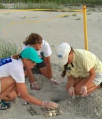 SCCF Seeking Sea Turtle Intern