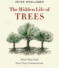 SCCF's New Nature-Inspired Book Club Launches with Hidden Life of Trees