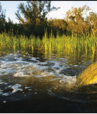 Marsh Removing Nutrients During Summer Flooding