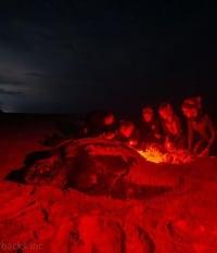 Evenings at Homestead Kicks off with Florida Leatherbacks