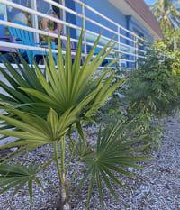 Sanibel Sea School Benefits from Landscape Redesign