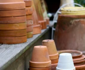 container-gardening-with-native-plants