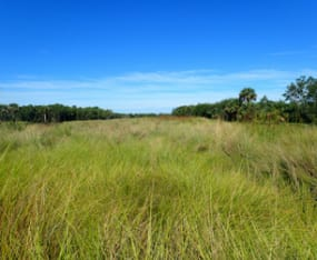 trail-walks-explore-sanibels-interior-wetlands