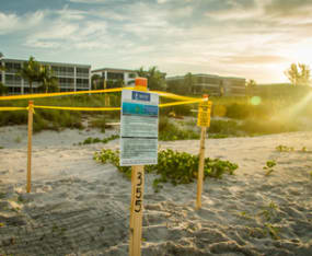 How To Protect Beach Nesting Wildlife