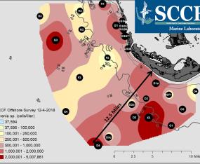 SCCF Offshore Sampling Update: 12.4.18