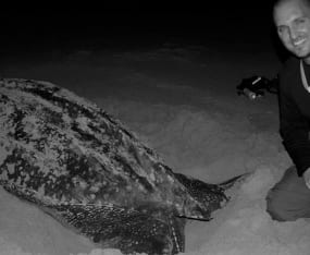 evenings-at-the-homestead-sea-turtle-research-collaboration