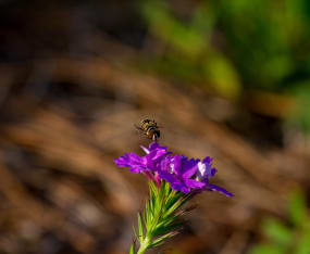 native-and-solitary-bees-observation-workshop