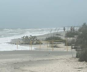 Cristobal's Winds & High Tides Wash Away 29 Nests