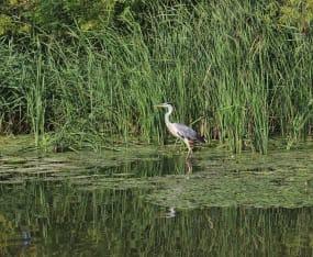 Everglades Update Focuses on EAA Reservoir