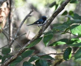 SCCF Launches New Sanibel-Captiva Bird List