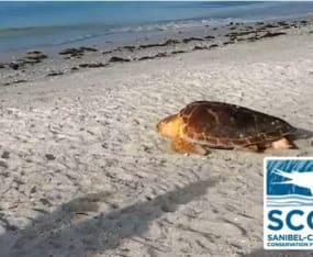 LCEC Funds Video on Sea Turtle Program
