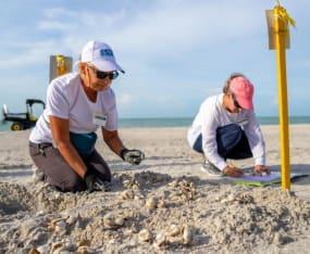 Sea Turtle Volunteers Busy with Hatching Season