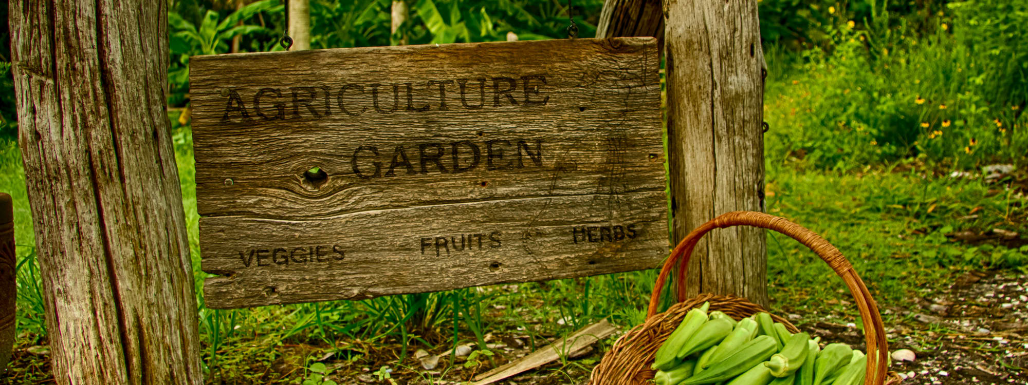 Native Landscapes & Garden Center