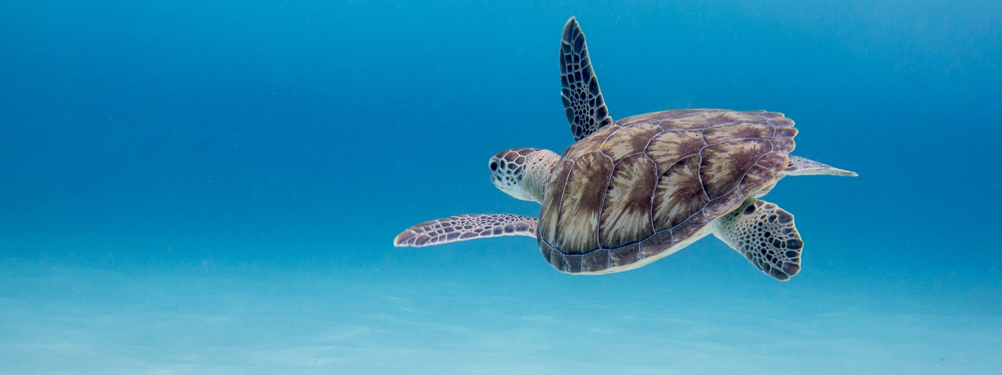 Sea Turtle Season Underway