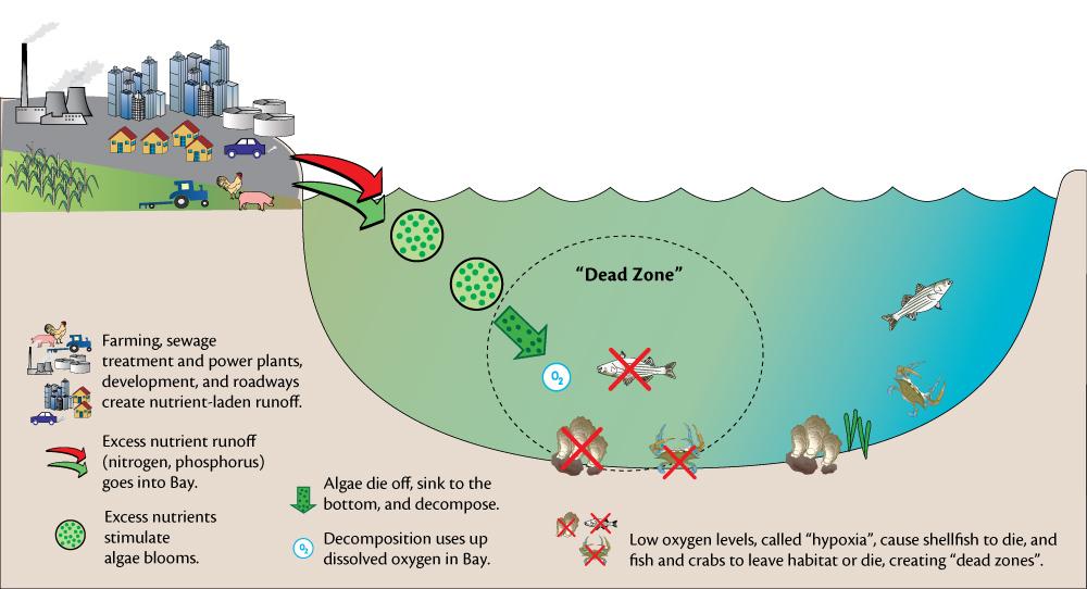 sccf recon rh recon sccf org dissolved oxygen meter diagram Dissolved Oxygen Color Chart