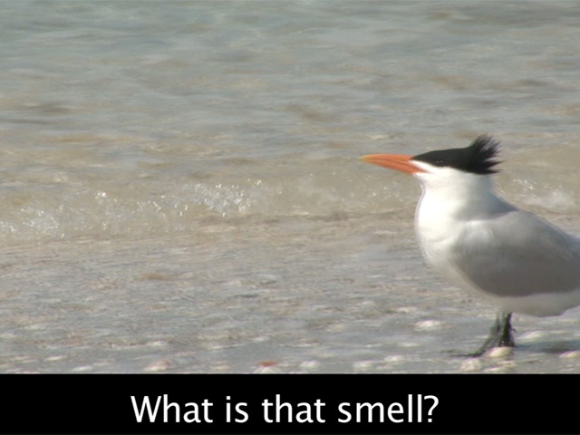 Bird Watching With Subtitles #1 - Smell