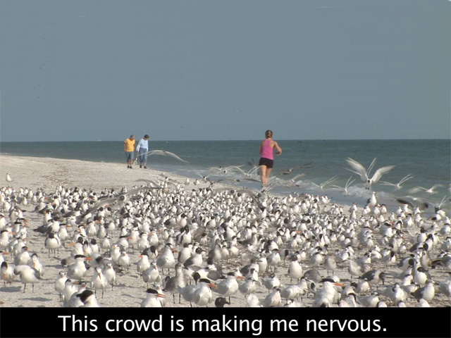 Bird Watching with Subtitles #2 - Anger