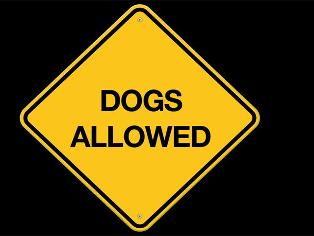 Dogs on Sanibel