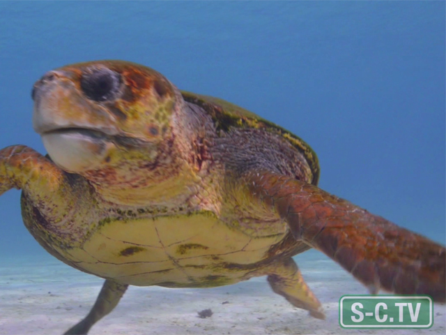 3 Ways You Can Protect Sea Turtles