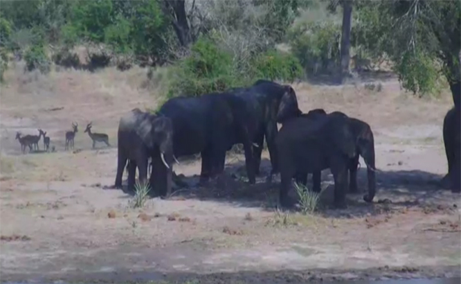 Med litt flaks kan du se et ordentlig tverrsnitt av dyrene på savannen. (Skjermbilde: Africam)