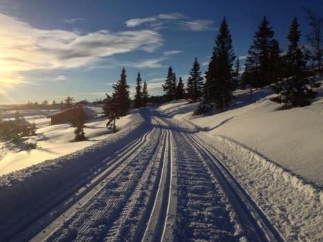 TRIKKESKINNER: 50 meter fra tomta vår går det flotte skiløyper innover fjellet.