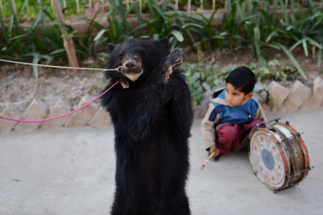 Her danser en bjørn i gatene i Pakistan mens et barn slår på en tromme. (Foto: AFP/Scanpix)