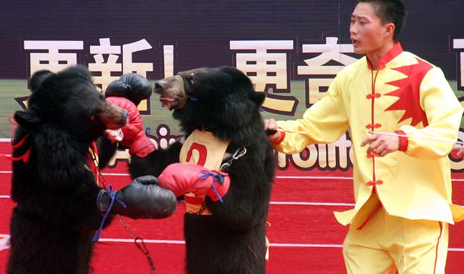 Her trenes to bjørner opp til en dyreolympiade i Kina. (Foto: AP/Scanpix)