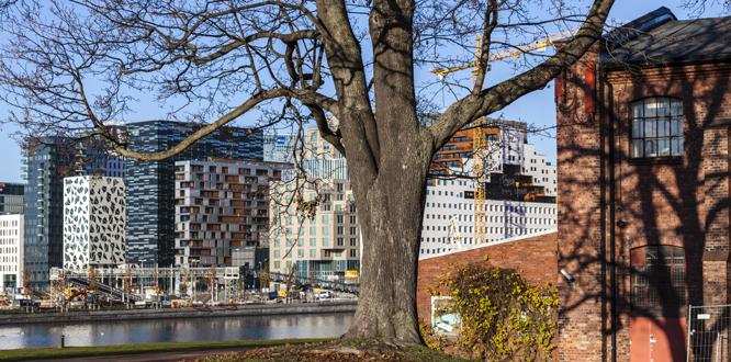 Barcode-rekken, også kalt Opera-kvarteret, høyhusrekken i utbyggingsområdet i Bjørvika i Oslo mellom sporområdene ved Oslo S og den nye Dronning Eufemias gate. Middelalderparken i forgrunnen.  Foto: © Svein Nordrum / NTB scanpix